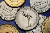 Coins of Slovenia. White stork (Ciconia ciconia) depicted on the Slovenian 20 tolar coin.