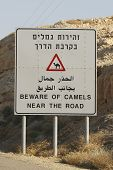 Beware of Camels near the road sign