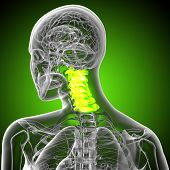 3D Render Medical Illustration Of The Cervical Spine