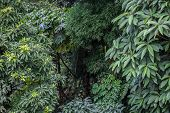 stock photo of darjeeling  - Green branches of different plants - JPG