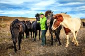A woman tourist befriends a group of Icelandic Ponies in the Iceland countryside