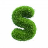 Letter s of green grass
