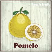 Fresh Fruit Sketch Background. Hand Drawing Illustration Of Pomelo