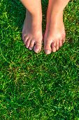Vertical Picture Of Female Legs On A Green Lawn