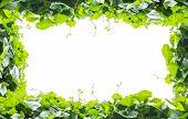 foto of gourds  - Green leaves frame of sponge gourd isolated on white background - JPG