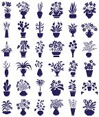 picture of peyote  - icons on white background theme houseplants and flowers - JPG