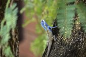foto of fanny  - Blue lizarbeauty in park colorful background blur - JPG