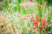 image of windy  - close up red flower in windy day at summer for background