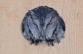 foto of nesting box  - Evil Looking Western Screech - JPG