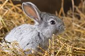 picture of rabbit hutch  - Little rabbit on Dry Grass  - JPG