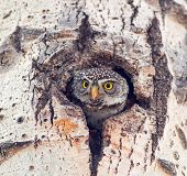 picture of hedwig  - In a southern Alberta park - JPG