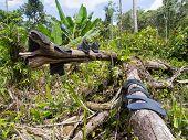stock photo of jungle  - The jungle of Papua - JPG