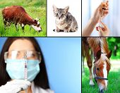 image of animal husbandry  - Vaccination and treatment of animals - JPG