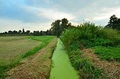 picture of green algae  - a green with algae intergrown small creek - JPG