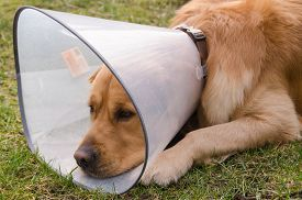 picture of irritated  - Dog  - JPG