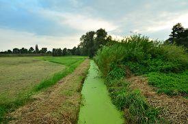 image of green algae  - a green with algae intergrown small creek - JPG