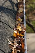 Fall Cleanup - Leaves In Gutter poster