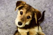 stock photo of cute puppy  - Cute puppy - JPG
