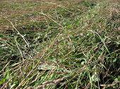 New-Shorn Grass Background.