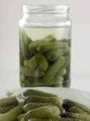 Cucumber - Pickle