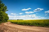 Dirt Road In Flowering Field, Beautiful Countryside, Sunny Day poster