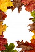 Colorful autumn frame made from maple and oak leaves on white background