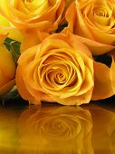 classy photograph of some golden roses reflected in a golden surface