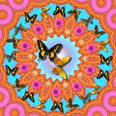 digitally created peace mandala in the tradition of flower power