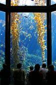 Undersea Wonder Tall