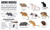 Pets_rodents_mouse_7 poster