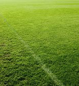 Green grass texture of a soccer field