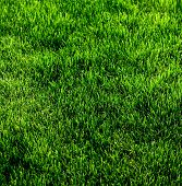 Green grass texture from a soccer field