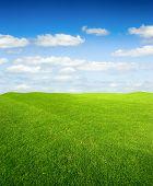 Campo de grama verde e céu azul