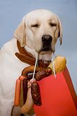 Dog with an appetizing set of sausages