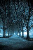 dunklen Park-Gasse