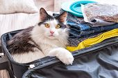 Cat sitting in the suitcase or bag and waiting for a trip. Travel with pets concept poster