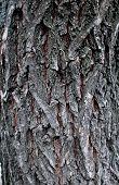 Old Tree Bark, Texture Tree Bark, Background Tree Bark, Background Wooden Bark poster