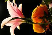 Flores teatrais