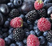 Background Of Fresh Fruits And Berries. Ripe Blackberries, Blueberries, Plums And Raspberries. Mix B poster