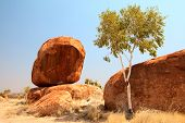 granite eroded rock formation, big stone pebbles geology by erosion Devils Marbles Northern Territory Australia landmark in Aboriginal culture tourism destination in outback white gum tree poster