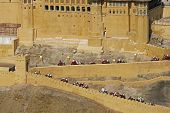 Elephants Taking Tourists To Amber Fort poster