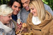 image of foursome  - happy foursome of ramblers picking mushrooms in forest - JPG