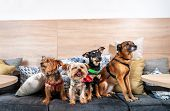 Four Funny Cute Dogs Ex Abandoned Homeless Adopted By Good People And Having Fun On The Pillows In T poster