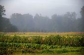 Landscape With Mist In Vegetable Garden. poster