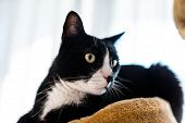 A Black Cat With A Black And White Snout, Lies On A Brown, Cat Scratcher Inside The Home. poster