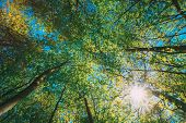 Spring Summer Sun Shining Through Canopy Of Tall Trees Woods. Sunlight In Deciduous Forest, Summer N poster