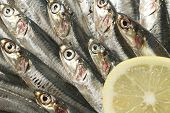 A Crowded Herd Of Sardines