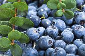 blueberries with water drops