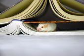 Mouse Hides