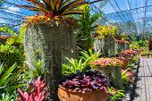 pic of monocots  - Bromeliads plants in the glass house of botany - JPG